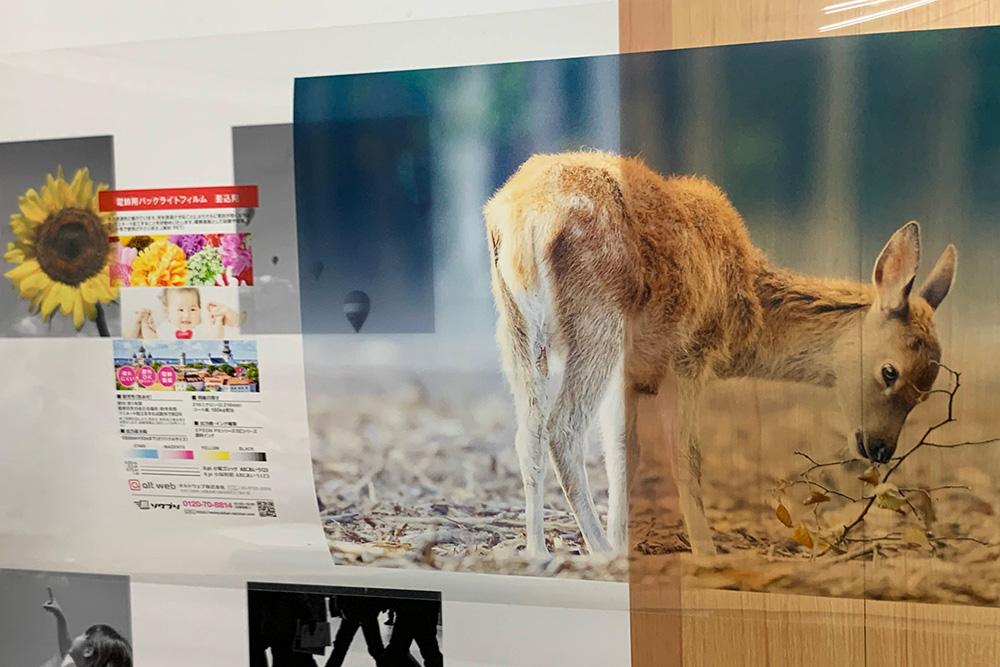 透明フィルム(PET)の商品写真